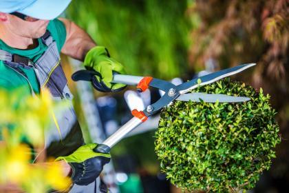 5 akcesoriów do utrzymywania ogrodu - od nożyc i kosiarek po wertykulatory. Niezbędnik ogrodnika
