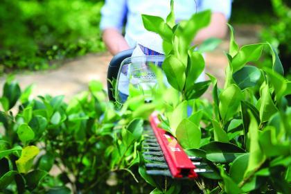 Żywopłot w ogrodzie - kiedy, jak i czym przycinać żywopłot